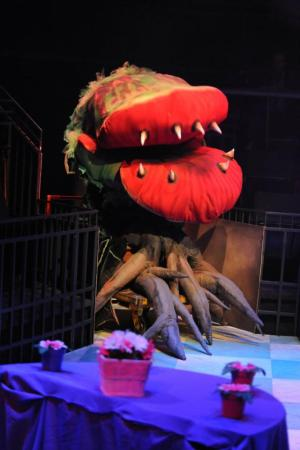 LITTLE SHOP OF HORRORS, DENVER, PHAMALY, THEATRE
